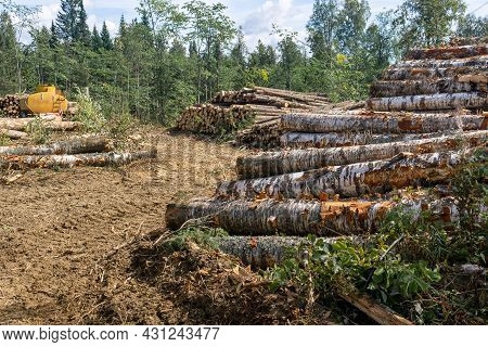 View Of The Felling - Deforested Land And Stacks Of Sawn Logs