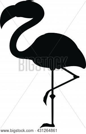 Flamingo Standing On 1 Leg. Black Bird Silhouette Against White Background No Sky. Free Vector