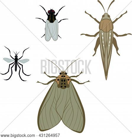 Big Set Of Mosquito House Fly Moth And Locust Vector Illustration Fill And Outline Isolated On White