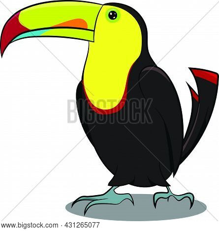 Black And Yellow Toucan Standing With Shadow. Black Yellow Bird. Birds From Different Parts Of World