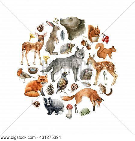 Forest Animals And Birds Round Shape. Wildlife Collection. Hand Drawn Wild Forest Animal Set. Bear,