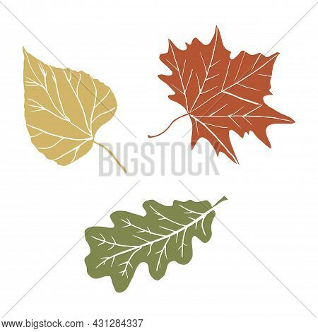 Abstract Autumn Leaves Silhouette For Concept Design. Vector Illustration Design. Fall Nature Tree L