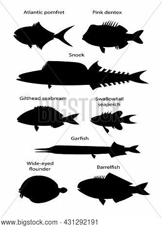 Atlantic Ocean Fishes. Black Silhouette Vector Illustration Collection.