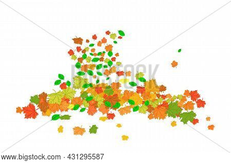 Orange And Red Fall Maple Leaves Isolated On White Background. Pile Of Dry Autumn Foliage. Heap Of F