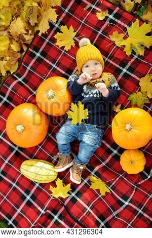 Cute Small Baby Boy Laying On A Plaid Blanket Near Small Colourful Pumpkins On Sunny Autumn Day. Fam