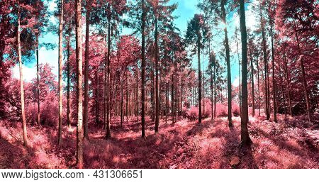 Beautiful Pink And Purple Infrared Panorama Of A Countryside Landscape With A Blue Sky