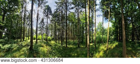 Beautiful View Into A Dense Green Forest With Bright Sunlight Casting Deep Shadows