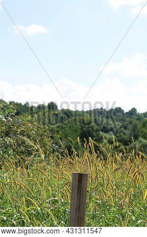 Field Flowers, Meadow, Wild Flowers In The Field, Sky And Clouds, Grasses In The Field, Wild Grasses