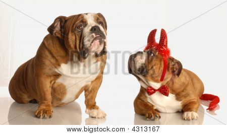 Dog Looking Up For Help With Little Devil