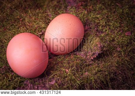 Chicken Egg Is Prepared For Cooking