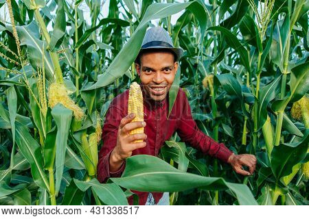 At Harvest Time, The African Farmer Looking At The Camera Shows The Sweet Corn Stripped. Farmer With