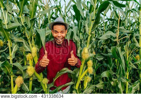 Happy Farmer With Hat In Corn Field Showing Thumbs Up. Expressive Afro Farmer Looking At Camera And