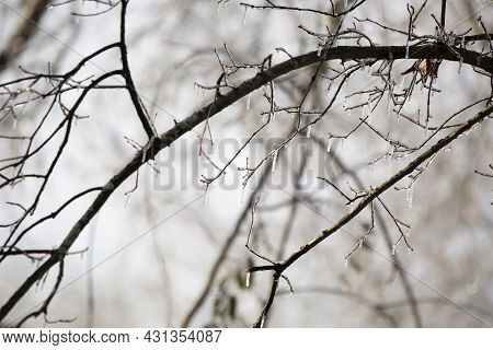 Ice Covering Tree Limbs On A Cold Day