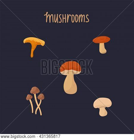 A Set With Edible Forest Mushrooms. The Inscription Mushrooms, A Collection Of Mushrooms For Cooking