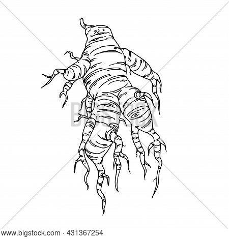 Anthropomorphic Vegetable Root, Ginseng Or Turmeric, Funny Character, Magic Mandrake, Vector Illustr