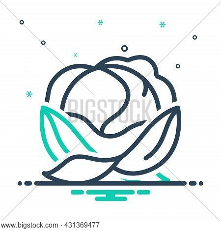 Mix Icon For Cabbage Leafy Green Foliage Harvest Ingredient Healthy Vegetable Agriculture Cultivatio