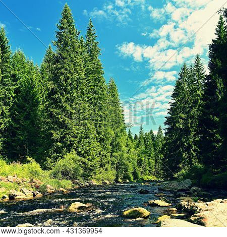 Beautiful River With Stones And Trees In The Mountains With Forest. Nature - Landscape. Background W