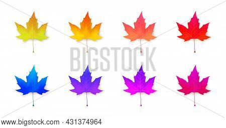 Set Of Vivid Maple Leaves Of Unusual, Neon Colors. Design Collection. Seasonal Autumn Abstraction. I