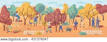 Harvesting People Gather Apple Fruits, Autumn Fall Garden With Orange, Yellow And Green Leaves. Man