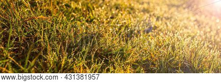 Autumn Grass Covered With Dew At Sunrise. Field Panorama. Autumn Season. Good Weather.