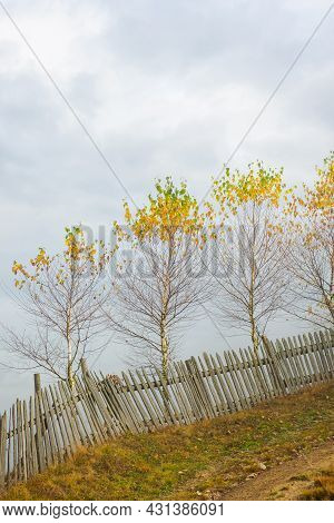 Wooden Fence On The Field. Rural Landscape On A Foggy Morning In Autumn. Misty Weather With Overcast