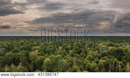 Polish Part Of Bialowieza Forest To East From Hajnowka Aerial View With Some Dead Trees In Foregroun