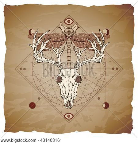 Illustration With Hand Drawn Deer Skull, Dragonfly And Sacred Geometric Symbol On Vintage Paper Back