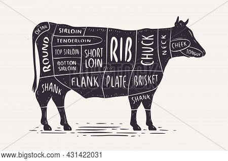 Cut Of Beef. Butcher Diagram And Scheme. Cow Vintage Typographic Vector Illustration