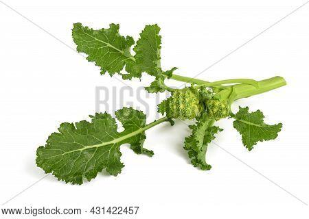 Fresh  Rapini Or Broccoli Rabe  Isolated On White Background