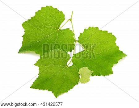 Vine Branch Isolated On A White Background