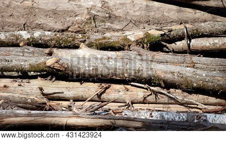 Old Felled Trees Lie In A Huge Pile Under The Open Sky