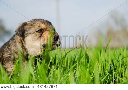 The Puppy Sits In A Basket On The Grass. Summer Sunny Day. Summer. Dog In Summer