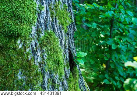 Small Plants Grow From The Trunk Of A Tree In The Forest, Spring Season With Fresh Green Leaves, Tin