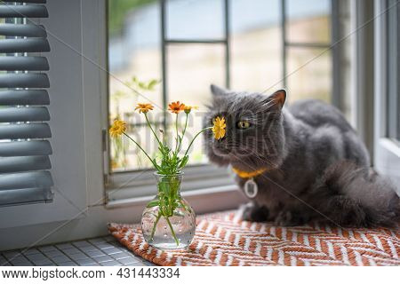 Cute Gray Fluffy Cat In A Yellow Collar Lies On A Mat On The Windowsill. He Sniffs The Wild Yellow F