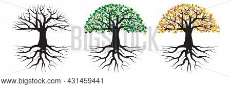 Three Season Tree. Trees With Roots. Environment Landscape. White Background. Vector Illustration. S