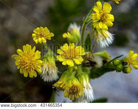 Bright Flowering Plant On The Lake Shore