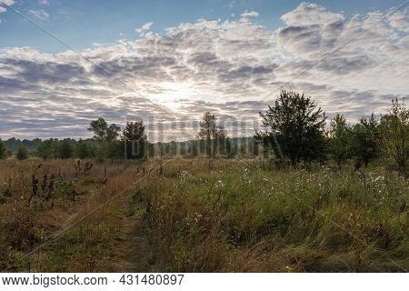 Meadow Overgrown With Single Trees, Bushes And Partially Withered Grass Against The Sky With Sun Beh