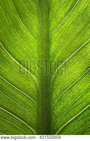 Natural green leaf plant using as spring background cover page greenery environment ecology wallpaper