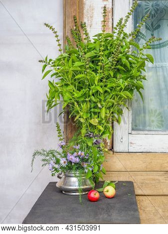 A Large Bunch Of Lemon Basil And A Bouquet Of Herbs With In A Metal Sugar Bowl A Ranetki
