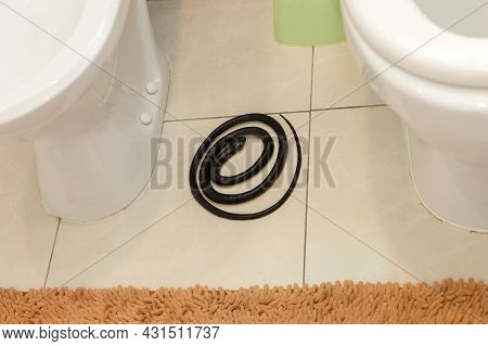 A Black Poisonous Snake Lies In The Apartment In The Toilet Room Between The Toilet And The Bidet.