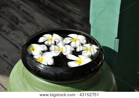 Frangipani Water Spa Bowl Float