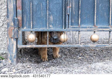 A Dog Lives Behind A High Gate