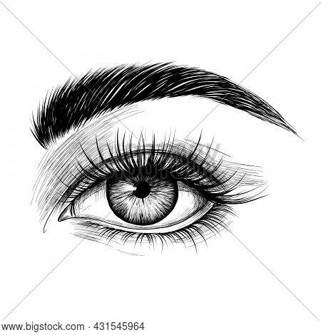 Hand-drawn Woman's Eye With Eyebrow And Long Eyelashes. Fashion Illustration. Vector Eps 10