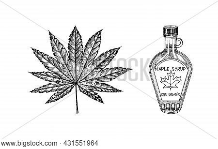 Bottle Of Maple Syrup And Leaf. Vintage Hand Drawn Drawing Style. Plant Or Herb. Acer Platanoides Or