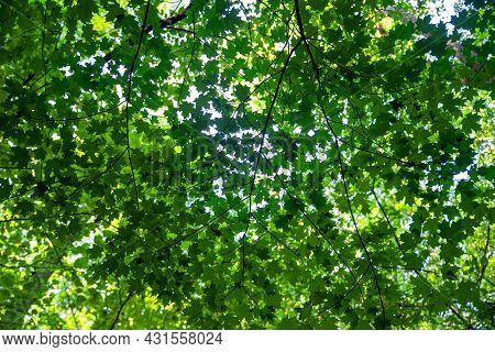 Low Angle View Of Green Leaf Woodland Canopy With Patterns And Texture And Shaded Light Nature Backg
