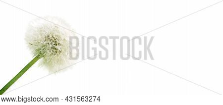 Beautiful Sommer Flowers In The Wind On White Background.
