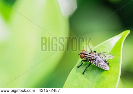 House Fly, Fly, House Fly On Green Leaf Blurred Background