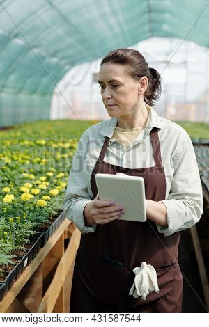Mature farmer in workwear using tablet while moving along tables with flower seedlings in large greenhouse