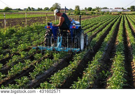 A Farmer On A Tractor Cultivates A Potato Plantation. Agroindustry And Agribusiness. Farm Machinery.