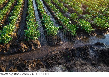 Plantation Water Flow Control. Water Flows Through Canals. European Farming. Agriculture. Agronomy.